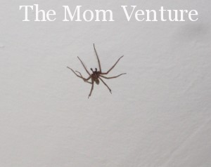 Mommy, get the spider out……